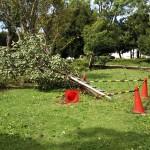 倒木は10本くらいあった