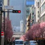 途中で見つけたオカメ桜の並木道