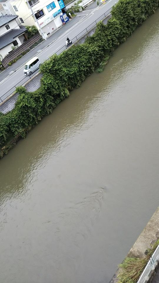 昨夜の名残で濁っている今朝の川