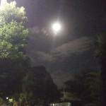 いいお月夜でした