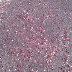 花びらより濃いピンク
