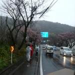 熱海桜の下を北へ北へと進む!
