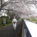 桜のトンネルを走る「タイグリス(雌虎)マスク)