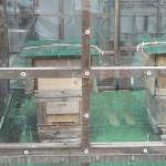 屋上の養蜂場