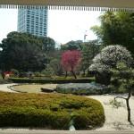 日本庭園の紅梅白梅も見事です