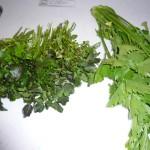 クレソン、セロリの葉、どちらも100円。安くてびっくり??