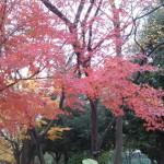 ジョギングコースの紅葉