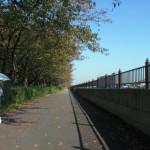 塀の向こうが柏尾川