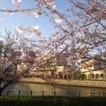 桜はまだ2分咲き