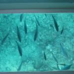 グラスボートから覗く海の底