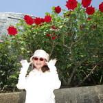 「熱情」と言う名のバラ