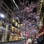 日本橋界隈の夜桜