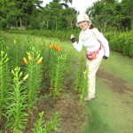 「歩く姿は百合の花」