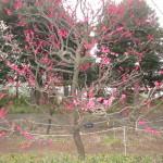 鹿児島紅がひときわ目立つ