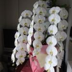 クライアントさんから届いた誕生日祝い花