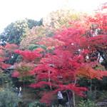 秋の夕陽に照る都会の紅葉