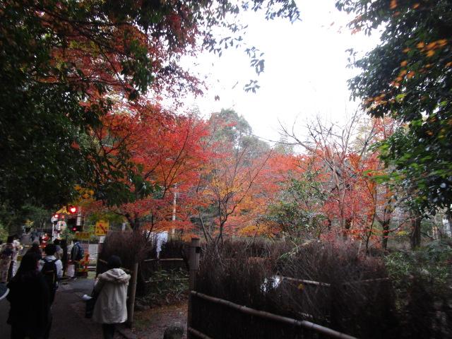 京都の嵯峨野道