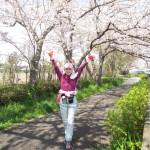 満開の桜の下を走り