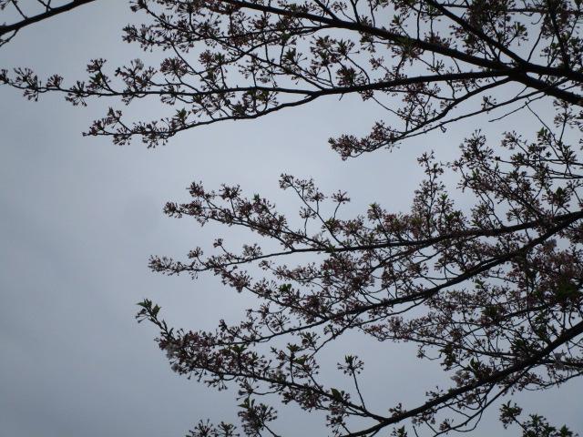 花の先端に蘂が残っている